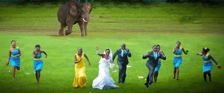 Какая африканская свадьба без слона.jpg