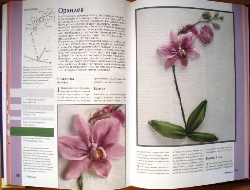 ac-orchid.jpg