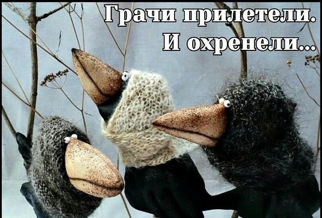 вороны.jpg